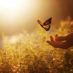 Butterfly-600x400