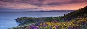 cropped-cropped-Irlanda-fiori-e-costa